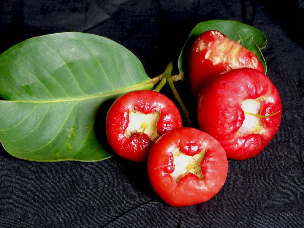 Rose apple thailand
